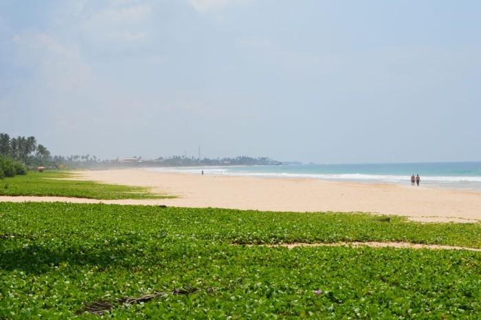 Strand bei der Sea-Turtle-Farm