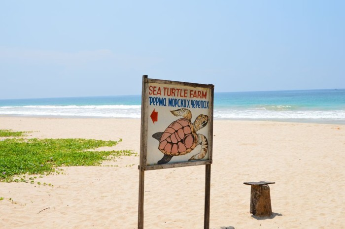 Strand bei der Sea-Turtle-Farm
