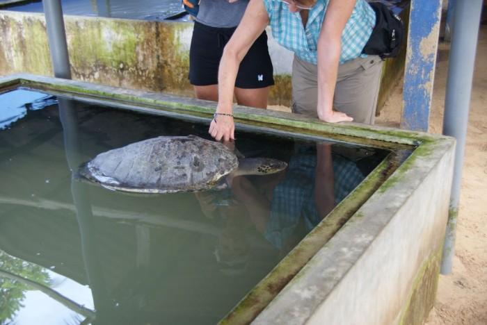Sea-Turtle-Farm09