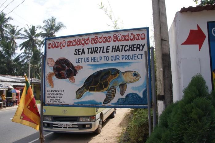 Sea-Turtle-Farm19