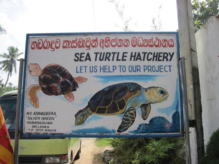 Sea-Turtle-Farm30