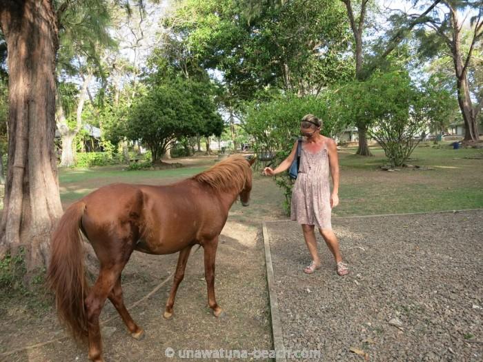 Pferde im Galle Park