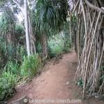 Jungle-Beach-Unawatuna28