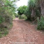 Jungle-Beach-Unawatuna30