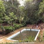 Kottawa Reserve Forest 05