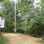 Kottawa Reserve Forest 04