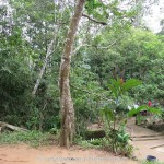 Kottawa Reserve Forest 03