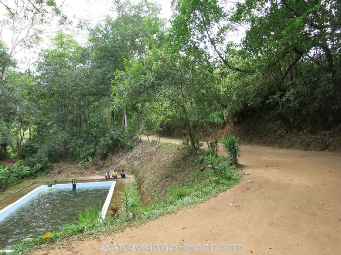 Kottawa Reserve Forest Swimming Pool 04