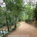 Kottawa Reserve Forest