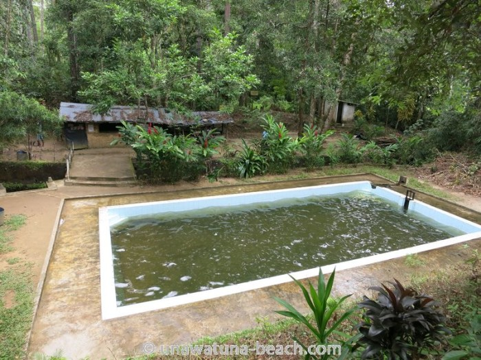 Kottawa Reserve Forest Swimming Pool 02