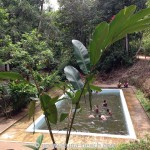 Kottawa Reserve Forest Swimming Pool