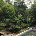 Kottawa Reserve Forest 01